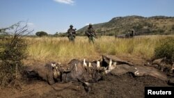 Members of the Pilanesberg National Park Anti-Poaching Unit (APU) stand guard as conservationists and police investigate the scene of a rhino poaching incident in South Africa, April 19, 2012.