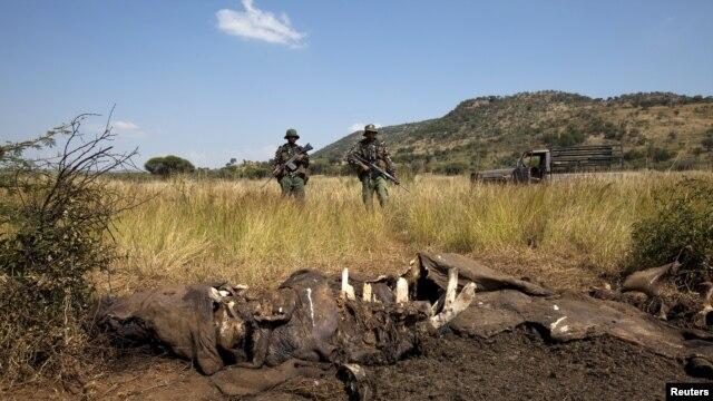 Các thành viên của đơn vị chống săn trộm quốc gia Pilanesberg (APU) tại hiện trường của một vụ săn trộm tê giác tại Nam Phi, ngày 19 tháng tư năm 2012.