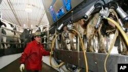 Una fábrica en Delaware retiró del mercado 16 variedades de quesos por posible contaminación.