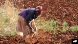 FILE - A Zimbabwean woman tills her vegetable plot.
