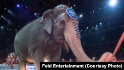 Elephants performing in the Ringling Bros. and Barnum & Bailey Circus traveling shows will be retired in May, the parent company says.