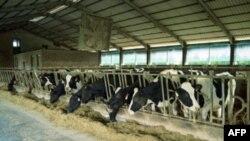 世界各地很多大型养殖场使用少量抗生素