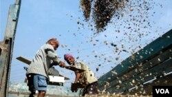 Pekerja India di perbatasan Agartala. Perjanjian perdagangan bebas antara India dan Malaysia akan mencapai 15 milyar dolar.Photo/Ramakanta Dey)