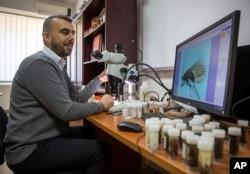 FILE Halil Ibrahimi looks at an insect called Potamophylax coronavirus in a laboratory in Pristina, 16 April 2021. (AP Foto/Visar Kryeziu)