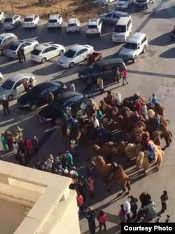 12月17日,内蒙古阿拉善盟额济纳旗牧民骑马和骆驼到旗政府前抗议 (南蒙古人权信息中心提供)