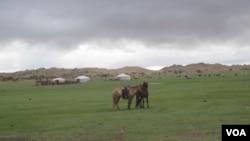 蒙古草原(美国之音白桦)