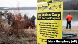 In this February 5, 2020, photo, wildlife officials take part in a roundup of Asian carp in Smith Bay on Kentucky Lake near Golden Pond, Kentucky.