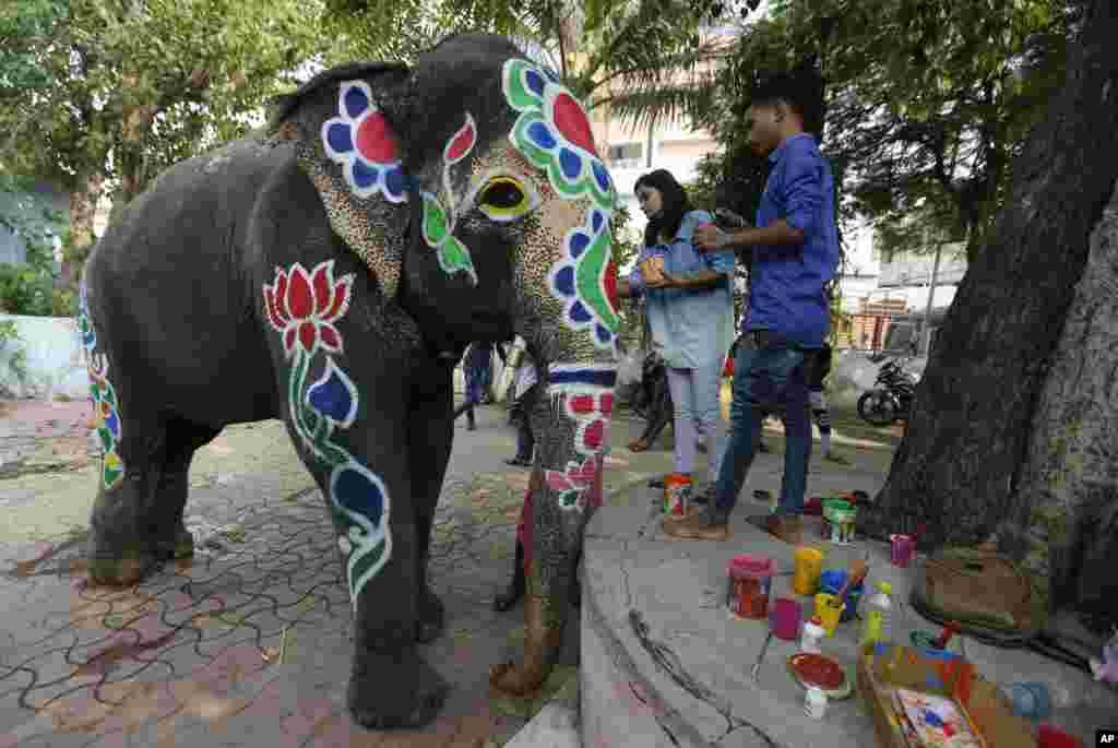 رنگآمیزی فیل در یکی از جشنواره های سالانه که در شهر احمدآباد برگزار می شود