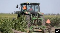 时事看台(卡拉):美国农民对美中达成贸易协议有何反应?