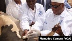 Mali Djamanatigui Ye Bagan Sogow Campagne Koroubow Kari