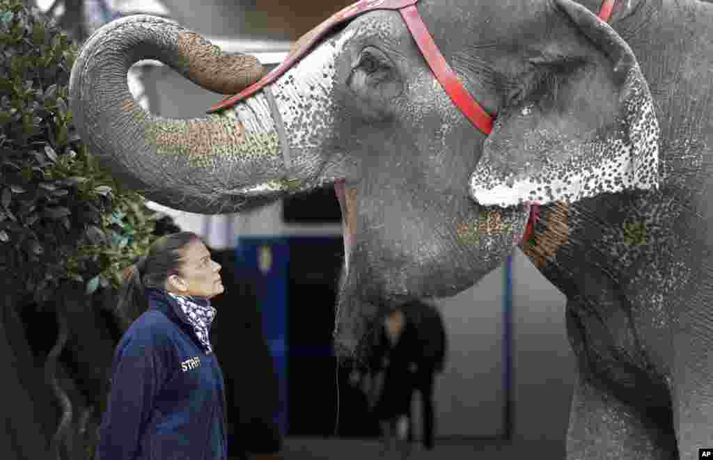 Princess Stephanie of Monaco poses with an elephant during the presentation of the 39th Monte-Carlo International Circus Festival.