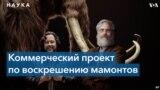 Как и зачем американские ученые собираются возрождать шерстистых мамонтов?