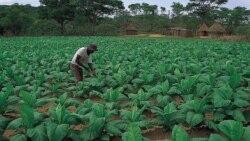 Zimbabwe's Resources For Zimbabwe's People