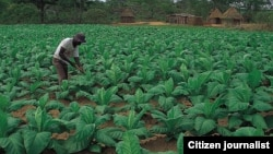 A representative of the Ministry of Lands says this is a serious cause for concern as Zimbabwe needs diligent farmers that can feed the nation. (File Photo)