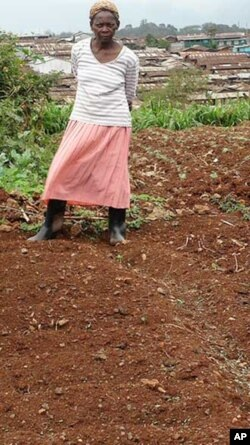 Kibera's farmers face an uncertain future because they don't own any of the land they're presently growing food on