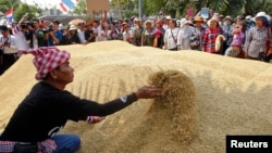 Farmers rearrange a pile of rice after dumping them on the ground outside a Bank for Agriculture and Agricultural Cooperatives in Bangkok, Thailand, during a rally demanding the Yingluck administration resolve delays in payment from the rice pledging scheme, March 11, 2014.