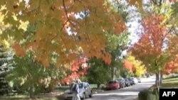 Zašto lišće menja boju?
