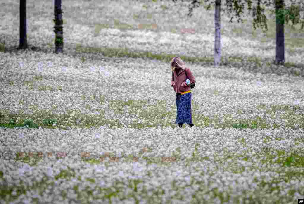 A woman walks in a small park covered with dandelions in Frankfurt, Germany.