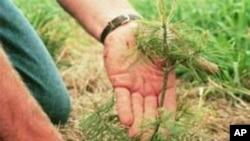 USDA tree planting