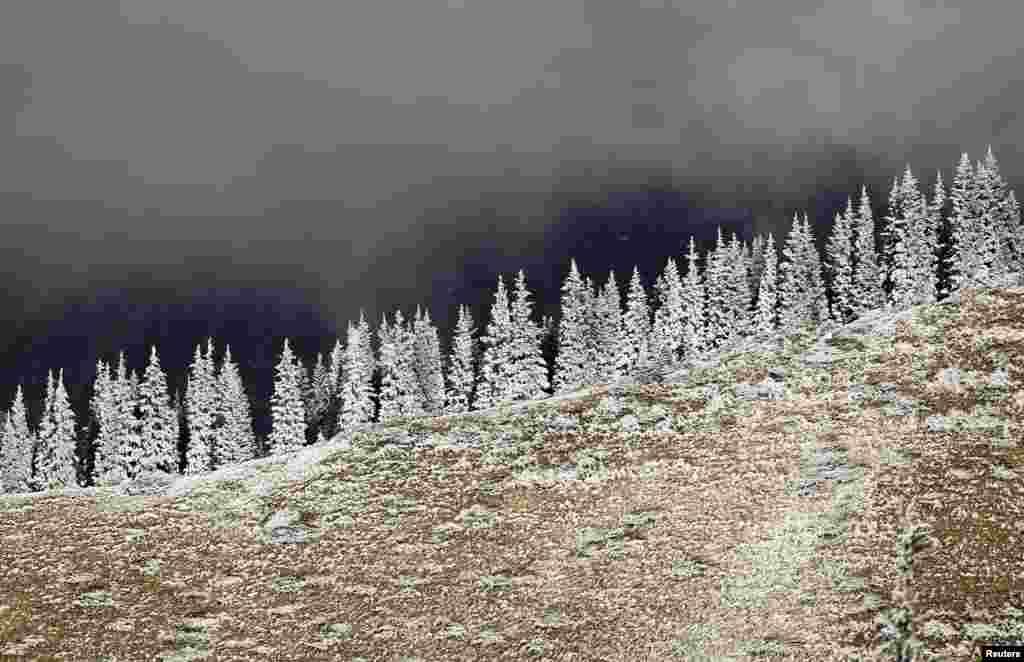 Hoar-frost covered trees are seen in a mountain outside Almaty, Kazakhstan.