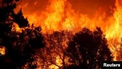 Des arbres brûlent près de Silverwood Lake à San Bernardino, Californie, le 8 août 2014.