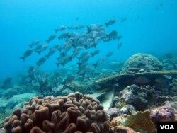 A biodiversidade irá diminuir em resultado das mudanças climáticas. Crédito: Nick Graham