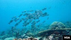 For Healthy Oceans, Three Problems to Resolve