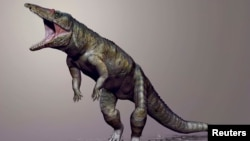 Carnufex carolensis, a newly-discovered crocodilian ancestor that walked on its hind legs, is pictured in this handout life reconstruction obtained by Reuters, March 19, 2015.