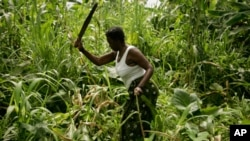 Camponesa trabalhando o campo em Cabinda