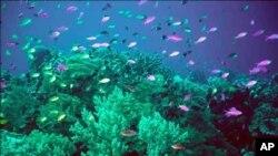 Oceani s 'morskom bolešću'
