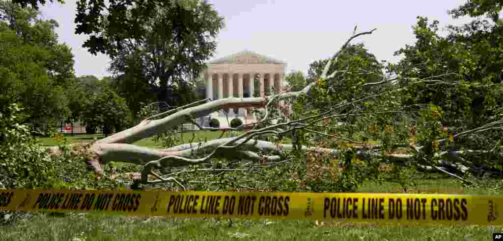 An American beech tree lies on Capitol Hill grounds in Washington, June 30, 2012, in front of the U.S. Supreme Court.