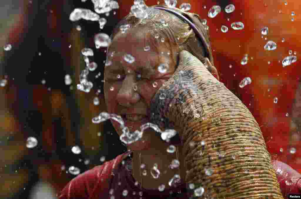 A tourist reacts as an elephant sprays her with water in celebration of the Songkran water festival in Thailand's Ayutthaya province.