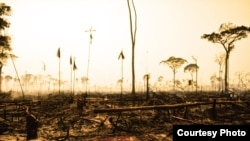 The UN says deforestation is responsible for nearly 20% of global carbon emissions (UNEP)