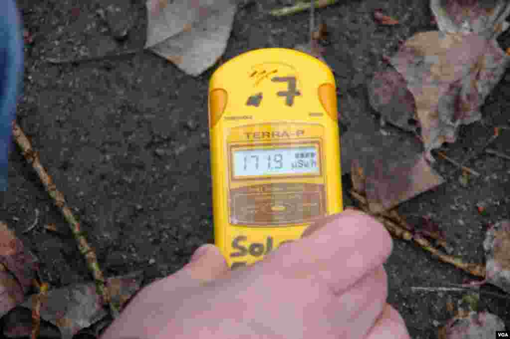 An unusually high radiation reading of about 172 micro-sieverts per hour over some vegetation on the ground of the Pripyat amusement park. (Steve Herman/VOA)