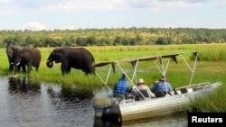 Des touristes observent des éléphants près de la rivière Chobe, dans le nord du Zimbabwe, aout 2012. Source : Reuters