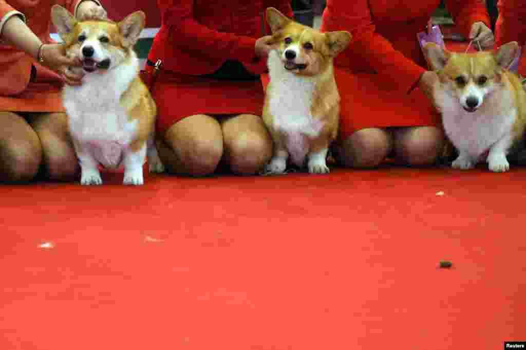'ورلڈ ڈاک شو' میں دنیا کے 70 ممالک سے لگ بھگ 17 ہزار کتے لائے گئے تھے۔