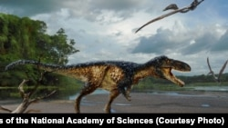 The fossilized remains of a new horse – sized dinosaur reveal how Tyrannosaurus rex and its close relatives became top predators, according to a new study published in the Proceedings of the National Academy of Sciences.