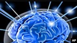 科学家研究用脑部健康组织承担因中风受损部位的功能