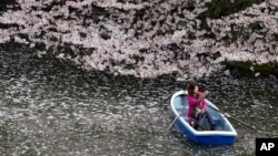 FILE - A woman takes a photo on a boat through a sea of cherry blossom petals at Imperial Palace moat in Tokyo, April 4, 2016.
