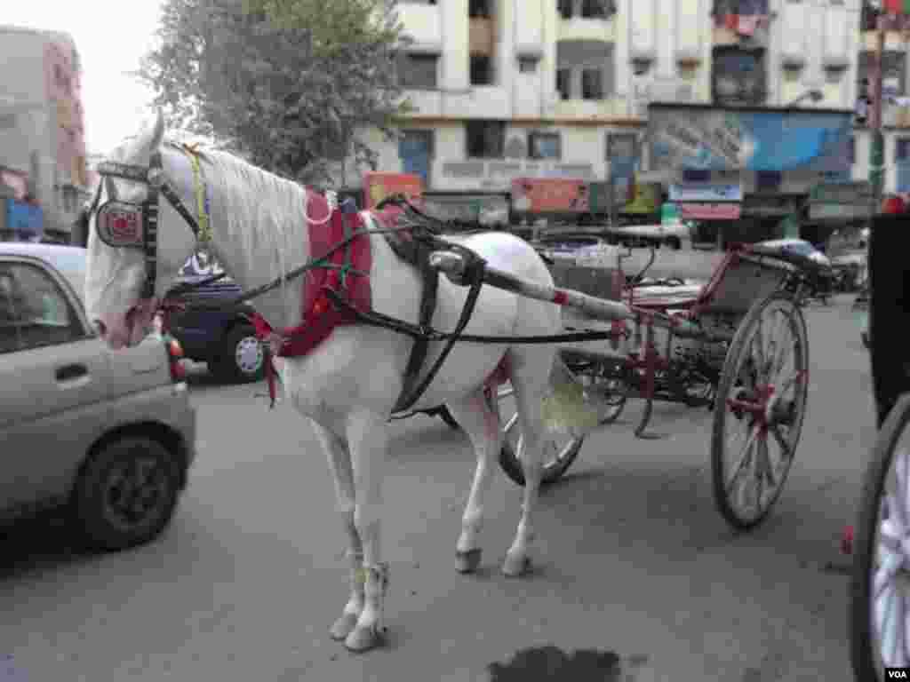 کراچی: ایک زمانے میں شہری بگھیوں میں سفر کیا کرتے تھے