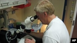 Notre Dame Professor David Hyde examines adult stem cells under the microscope.