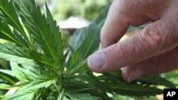 紐約市制定新大麻逮捕令