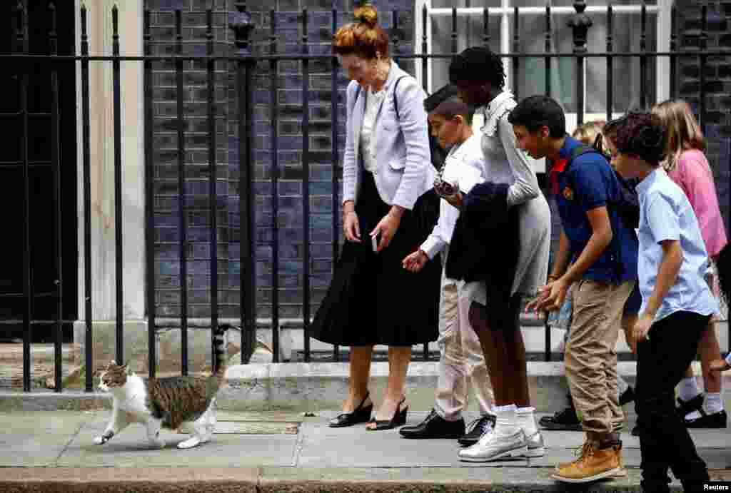 Schoolchildren interact with Larry the cat at Downing Street in London, Britain.