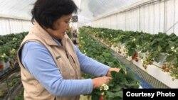 재일조선인 북송 사업에 의해 북한에 갔다가 다시 고향인 오사카로 돌아와 살고 있는 여성. 일본으로 다시 돌아온 북송 재일조선인과 자녀들은 소외감과 언어 문제 등으로 재정착에 어려움을 겪고 있다는 연구 결과가 나왔다.