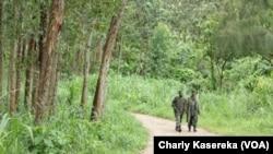 Des soldats des Forces armées de la République démocratique du Congo (Fardc) en patrouille à Oicha le 18 avril 2015. (Charly Kasereka/VOA)