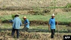Tại Thái Lan chính phủ lo ngại sẽ không có nước để tưới