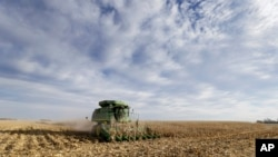愛奧華州一家農場的玉米田(資料圖片)