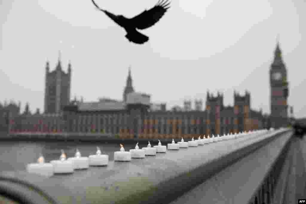Seekor burung terbang di atas lilin-lilin yang diletakkan di jembatan Westminster sebagai penghormatan terhadap korban serangan teror di dekat gedung parlemen Inggris di London.