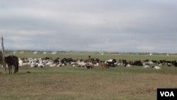 蒙古草原(美国之音白桦拍摄)