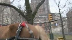 Велотаксі - заробіток та розвага у Нью-Йорку